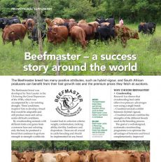 Beefmaster – a success story around the world