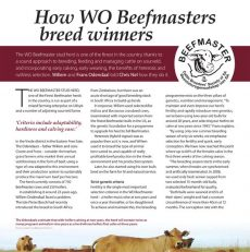 How WO Beefmasters breed winners?