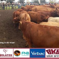 WO Beefmasters Information day
